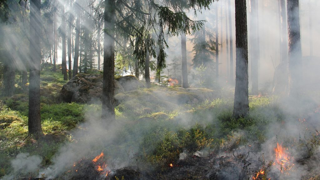 entra-en-vigor-la-prohibicion-de-realizar-quemas-agricolas-y-forestales-1920