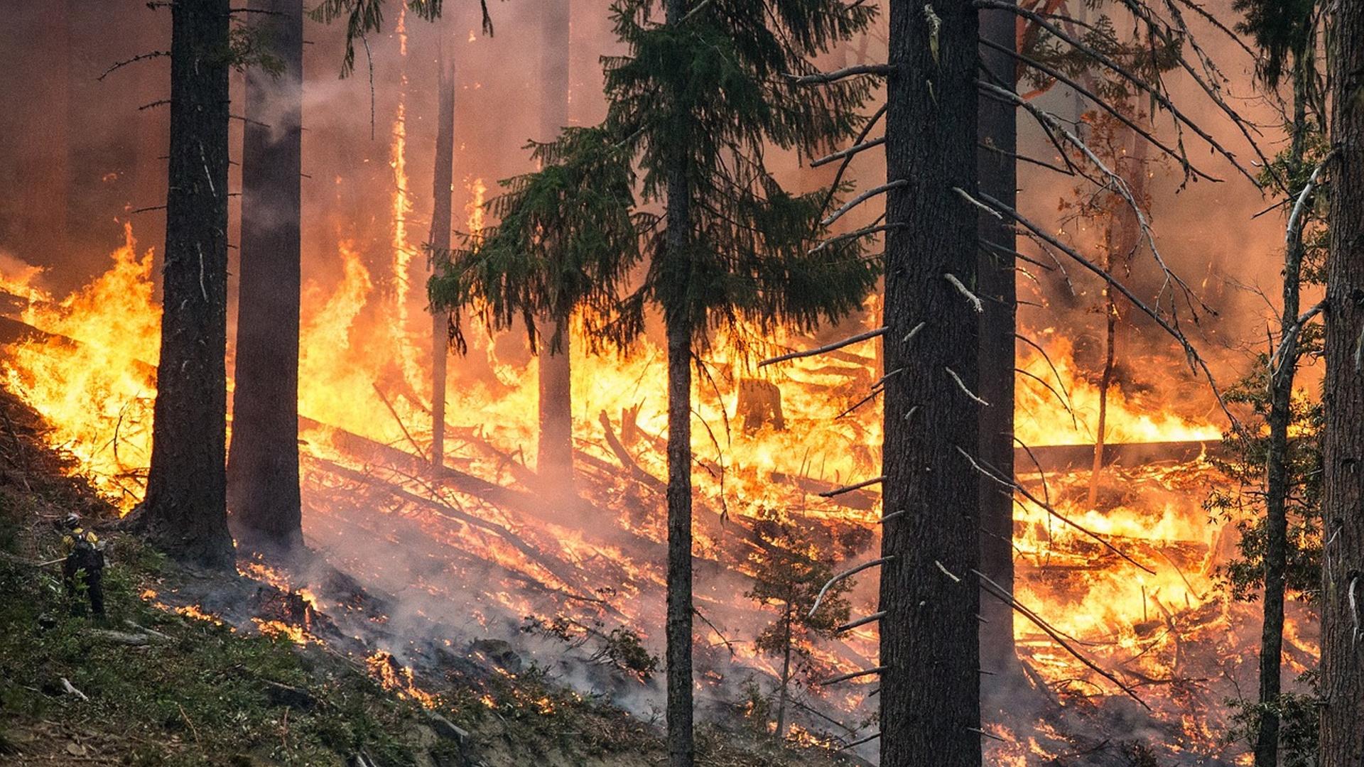 errores-del-incendio-de-Portugal-que-deben-ser-estudiados-1920