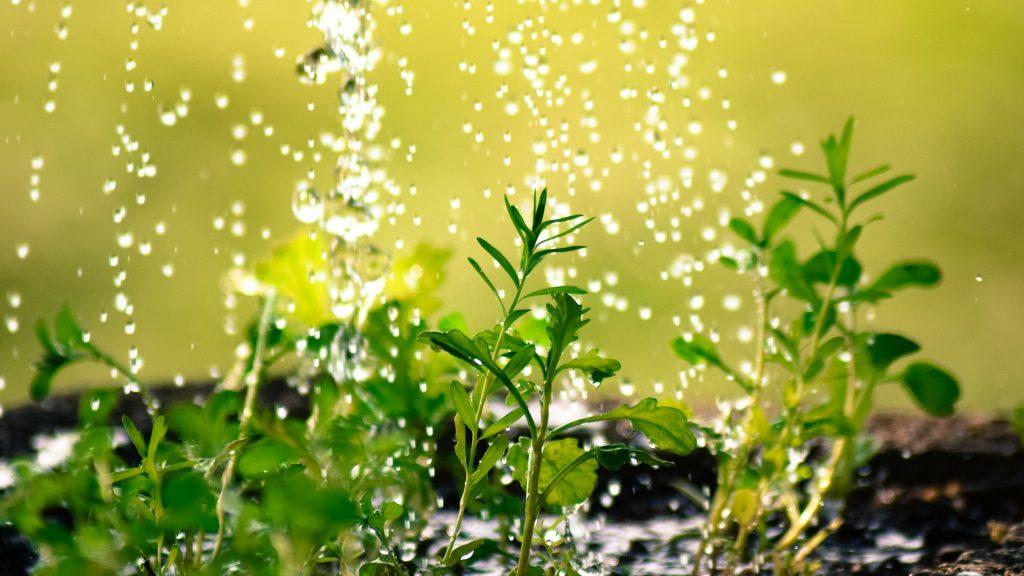 ahorrar-en-la-agricultura-uso-de-la-orina-como-fertilizante-1920