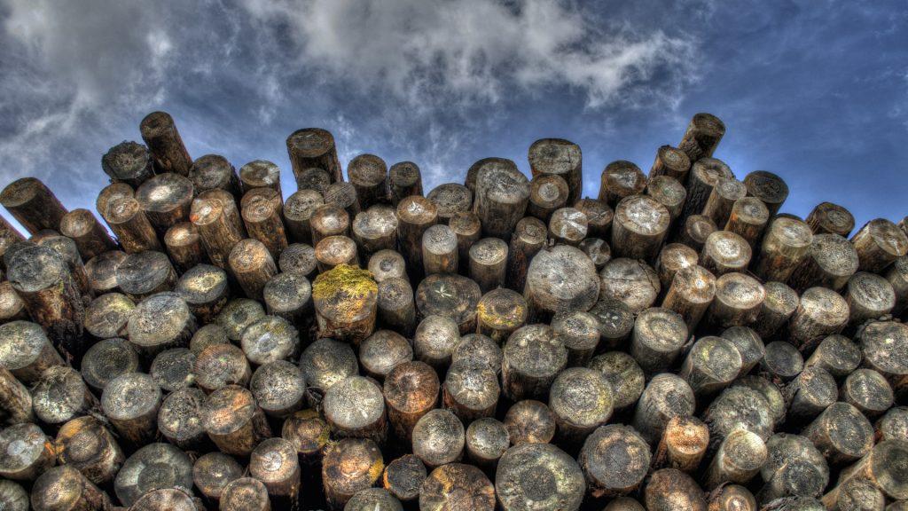 nace-la-axencia-forestal-da-industria-forestal-que-velara-por-la-salud-del-sector-1920