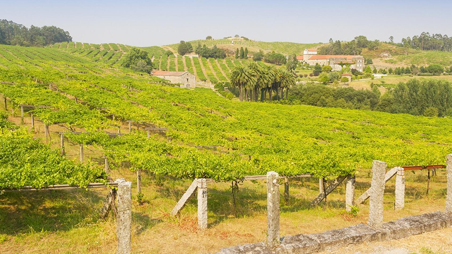 la-prestigiosa-wine-enthusiast-magazine-incluye-a-galicia-entre-las-candidatas-a-region-de-vino-del-ano-1920