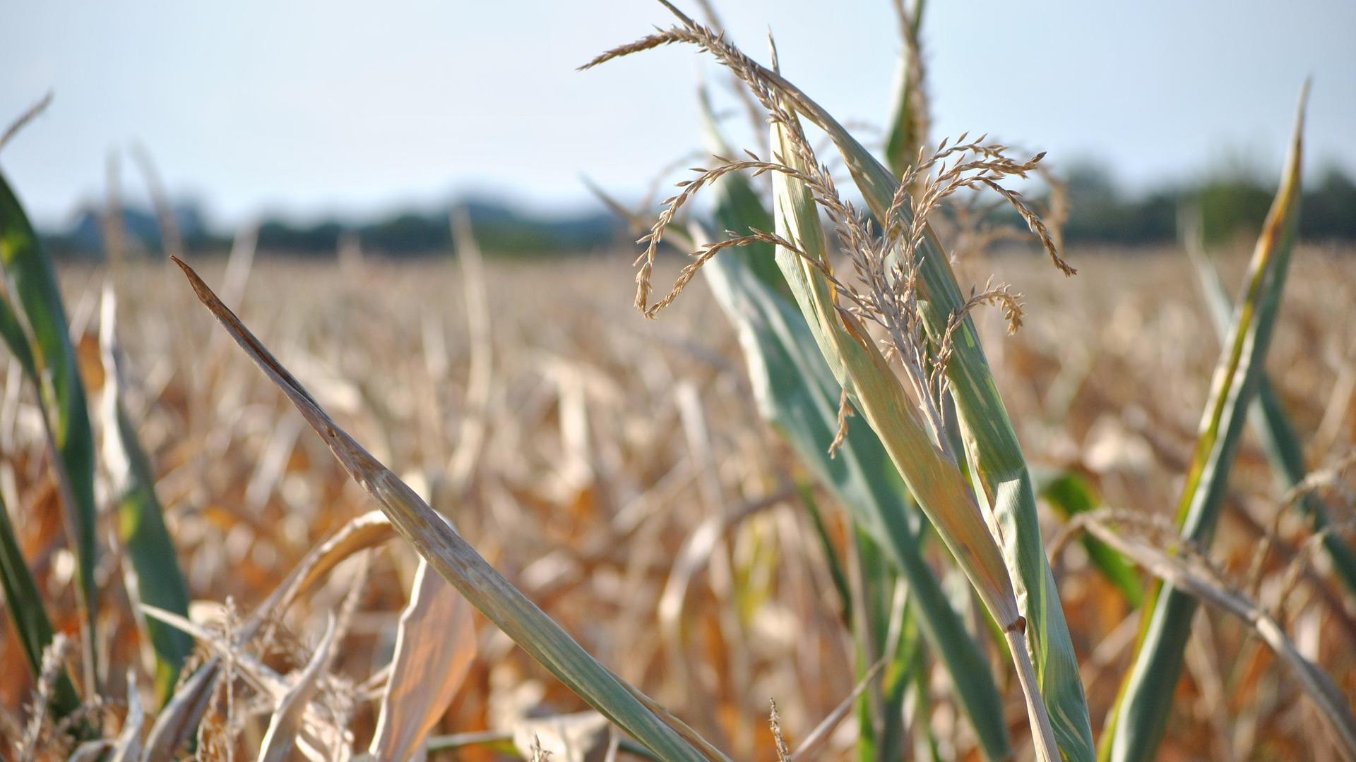 el-precio-de-los-seguros-agrarios-puede-incrementarse-hasta-en-un-100-1920