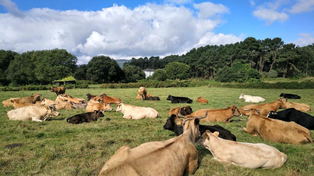 recomendaciones-para-evitar-el-estres-por-calor-vacas-1920