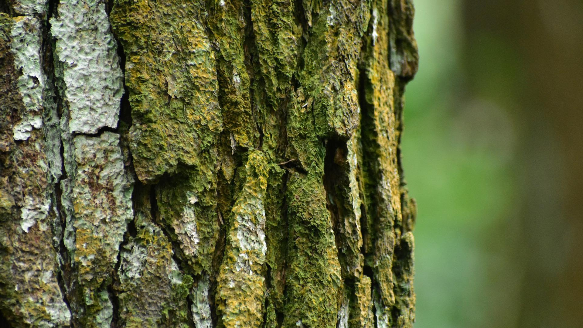 hasta-el-20-de-noviembre-para-postularse-al-premio-proyecto-innovador-forestal-2018