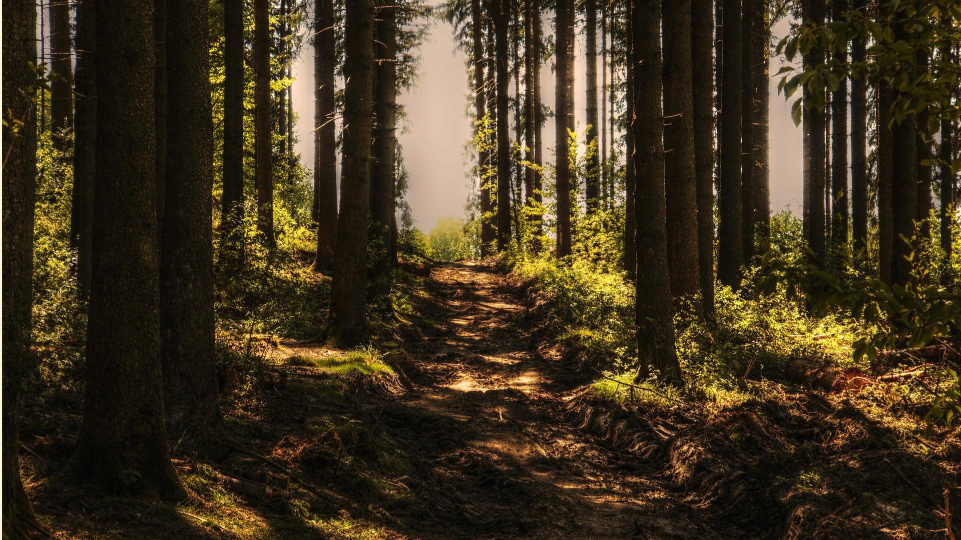 la-importancia-de-la-reforestacion-1920