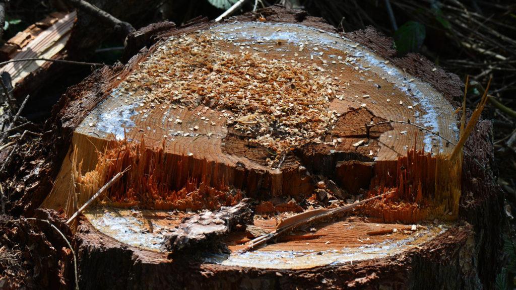 consejos-basicos-a-hora-de-desbrozar-y-cortar-madera-1920