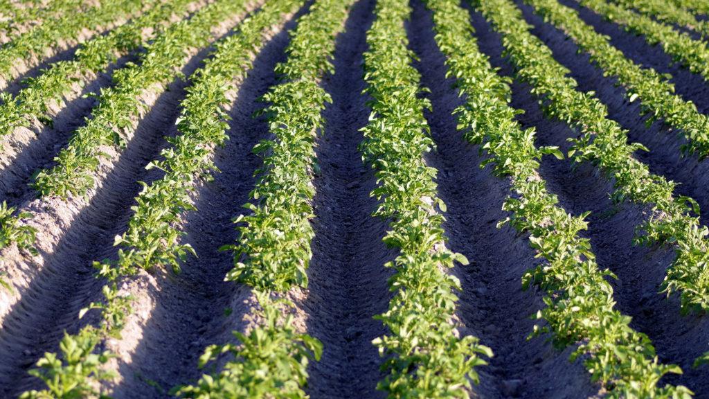 ayudas-para-explotaciones-agricolas-de-produccion-vegetal-1920