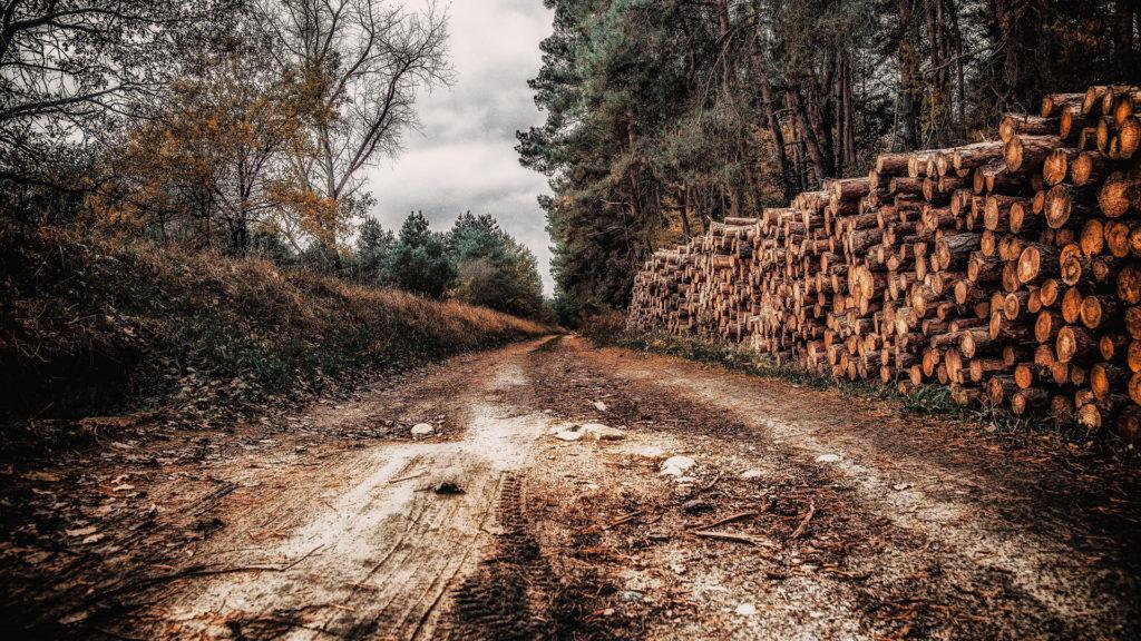 lista-de-empresas-forestales-beneficiarias-de-ayudas-para-la-compra-de-maquinaria-1920