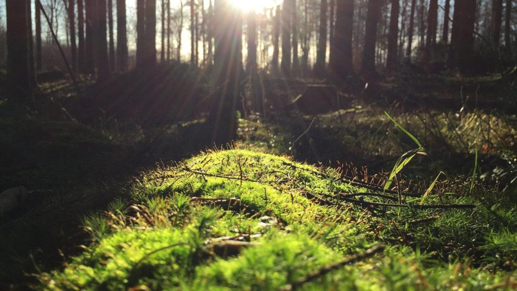 consejos-para-prevenir-el-covid-19-en-la-actividad-forestal-1920